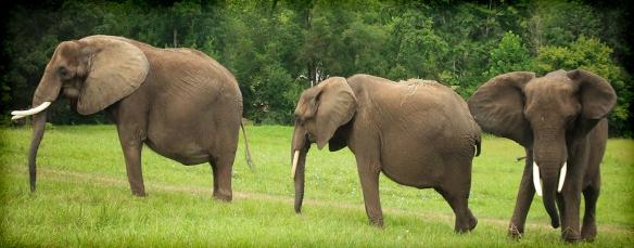 elephantscarousel