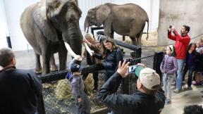 elephantfamilyphoto