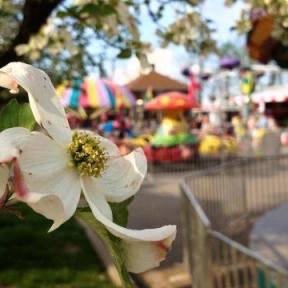 Dogwood Festival.jpg2