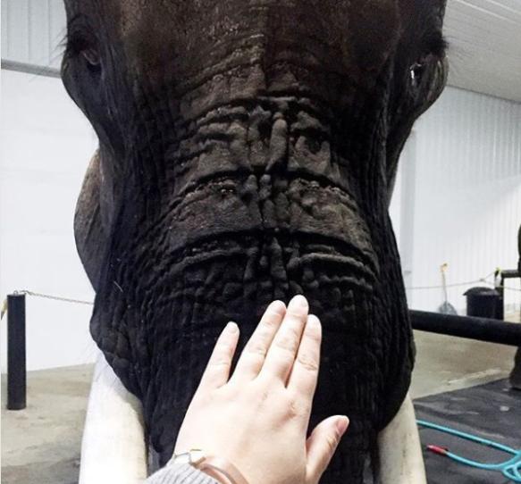 ElephantSpa4